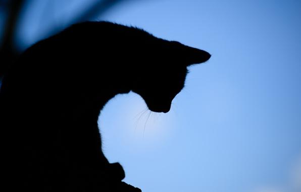 Красивые силуэты кошки картинки и изображения - интересная подборка 15