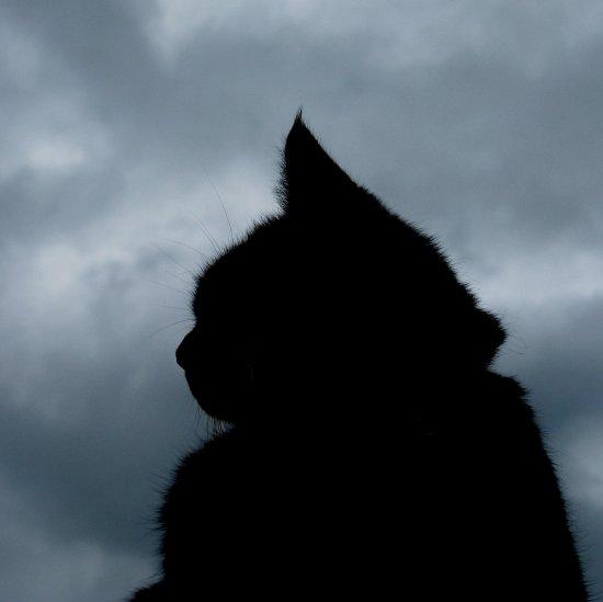 Красивые силуэты кошки картинки и изображения - интересная подборка 19