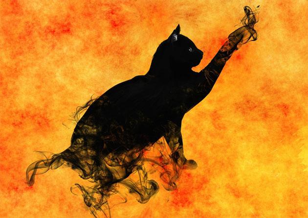 Красивые силуэты кошки картинки и изображения - интересная подборка 3