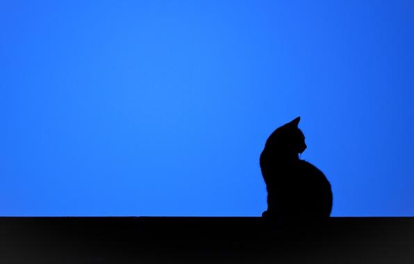 Красивые силуэты кошки картинки и изображения - интересная подборка 4
