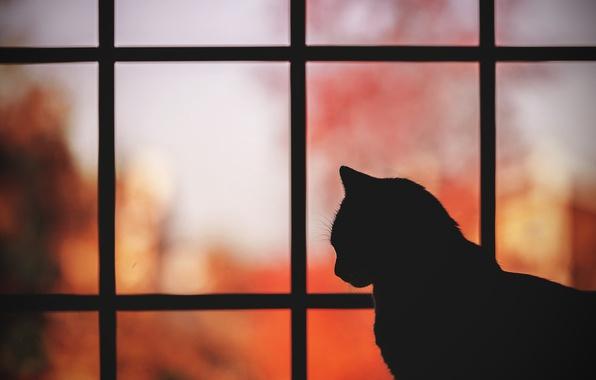 Красивые силуэты кошки картинки и изображения - интересная подборка 7