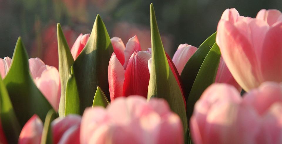 Очень красивые картинки цветов и букетов - скачать бесплатно 10