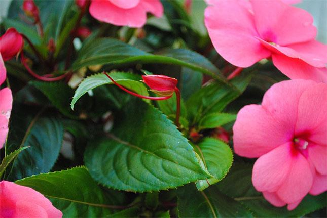 Очень красивые картинки цветов и букетов - скачать бесплатно 11