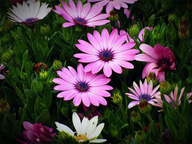 Очень красивые картинки цветов и букетов - скачать бесплатно 12