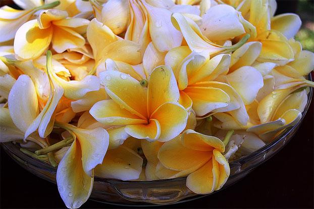 Очень красивые картинки цветов и букетов - скачать бесплатно 13