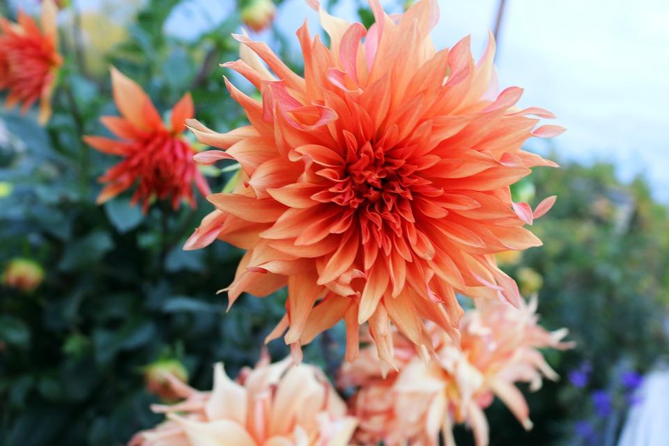 Очень красивые картинки цветов и букетов - скачать бесплатно 16