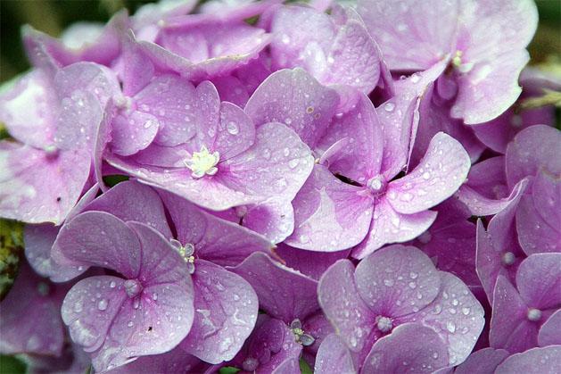 Очень красивые картинки цветов и букетов - скачать бесплатно 17