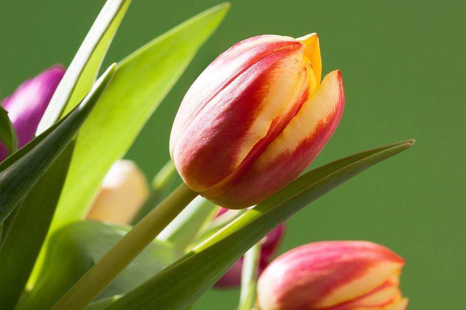 Очень красивые картинки цветов и букетов - скачать бесплатно 18