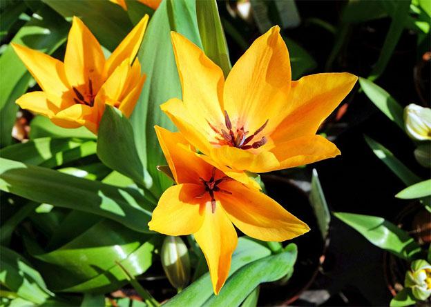 Очень красивые картинки цветов и букетов - скачать бесплатно 3