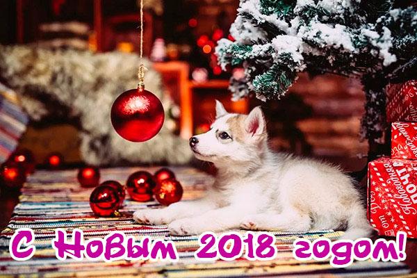 Поздравления С Новым годом собаки 2018 - картинки и открытки 11