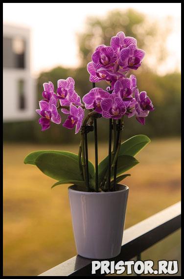 Правильный уход за орхидеей в домашних условиях - основные секреты 1