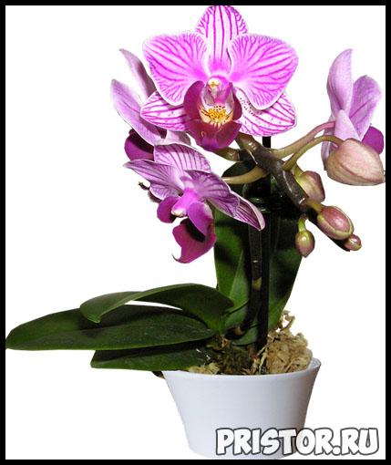 Правильный уход за орхидеей в домашних условиях - основные секреты 5
