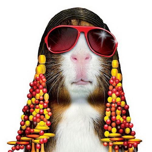Прикольные и смешные изображения животных - самые веселые №10 11