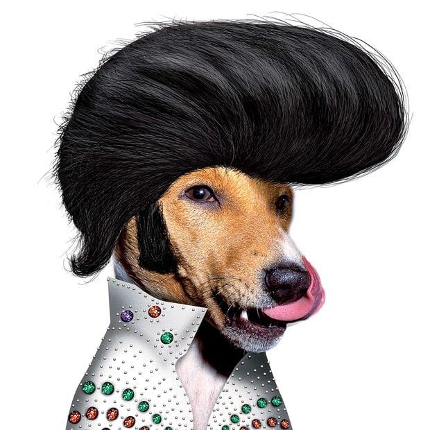Прикольные и смешные изображения животных - самые веселые №10 16