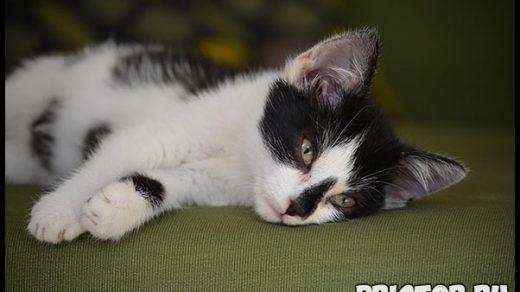Рвота у кошек - причины и лечение. Чем помочь котику и что делать 1