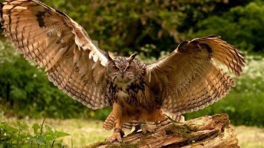 Редкие животные Владимирской области - список животных 4