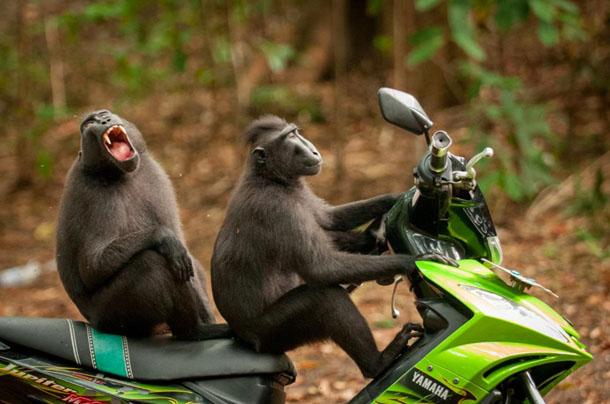 Самые смешные фото животных в 2017 году - смотреть подборку №14 4