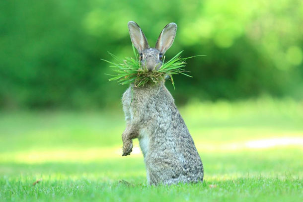 Самые смешные фото животных в 2017 году - смотреть подборку №14 8