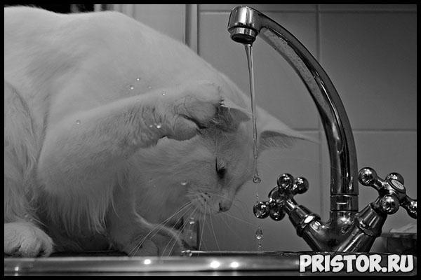 Сколько воды должна пить кошка в день Признаки нормально питья 2