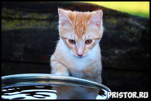 Сколько воды должна пить кошка в день Признаки нормально питья 3