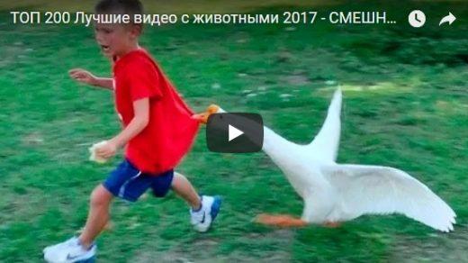 Смешные и прикольные животные - видео приколы, подборка №37