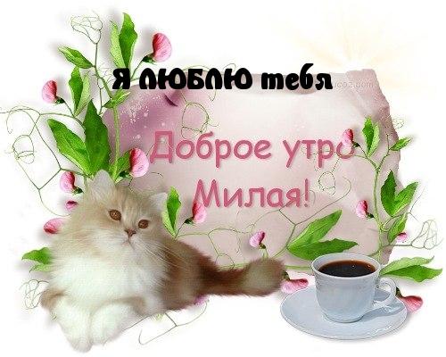 С добрым утром милая картинки и открытки - самые красивые, приятные 9