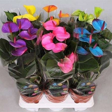 Тенелюбивые комнатные растения - для тех у кого дома плохое освещение 1