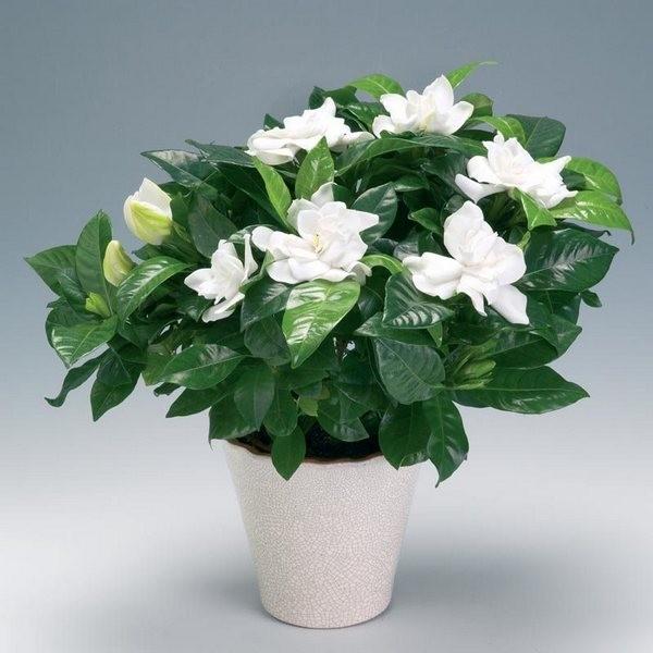 Тенелюбивые комнатные растения - для тех у кого дома плохое освещение 4