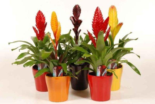 Тенелюбивые комнатные растения - для тех у кого дома плохое освещение 5