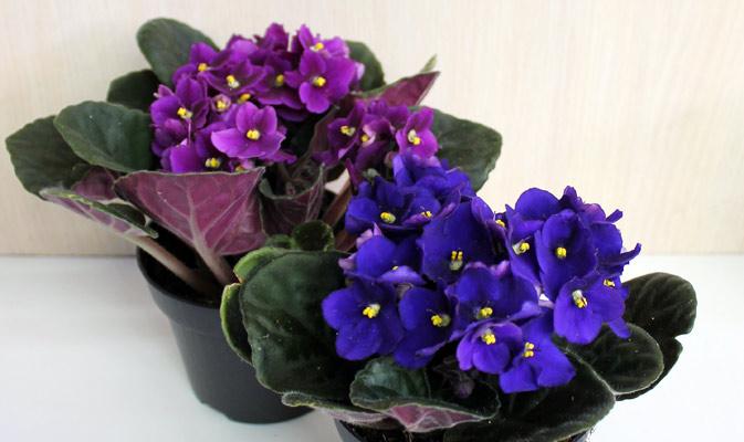 Тенелюбивые комнатные растения - для тех у кого дома плохое освещение 6