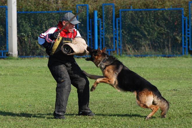 Дрессировка собак в домашних условиях - простые правила и приемы 2