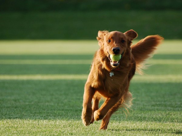 Дрессировка собак в домашних условиях - простые правила и приемы 3