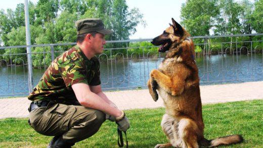 Дрессировка собак в домашних условиях - простые правила и приемы 4