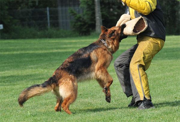 Дрессировка собак в домашних условиях - простые правила и приемы 5