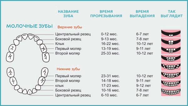 Первые молочные зубы схема