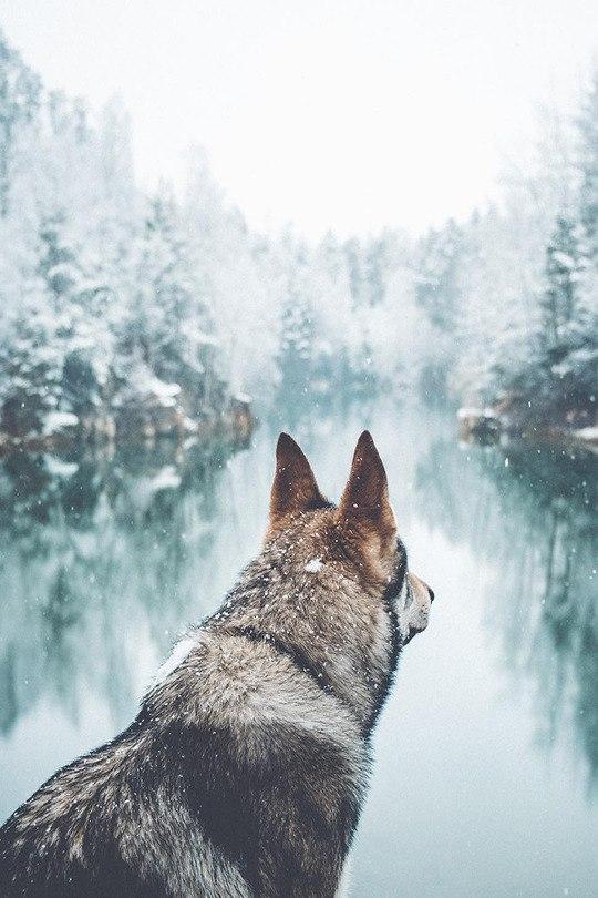 Картинки на аву зима для девушек и парней - скачать фотографии 3