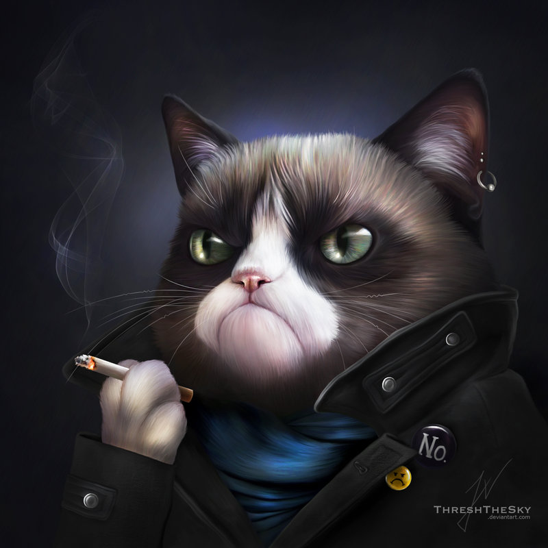Картинки на аву кошки и коты - самые интересные и невероятные 11