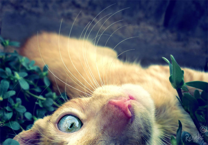 Картинки на аву кошки и коты - самые интересные и невероятные 3
