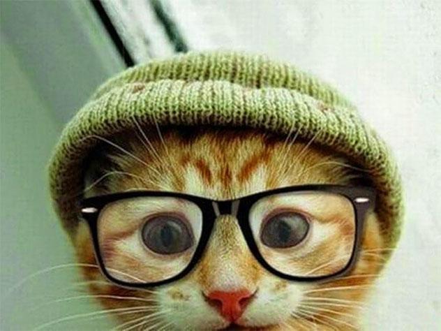 Картинки на аву кошки и коты - самые интересные и невероятные 5