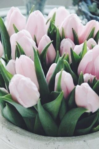 Картинки на телефон цветы 2018 - самые красивые и прикольные 10
