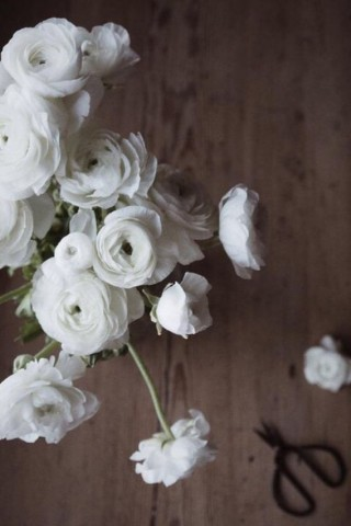 Картинки на телефон цветы 2018 - самые красивые и прикольные 12