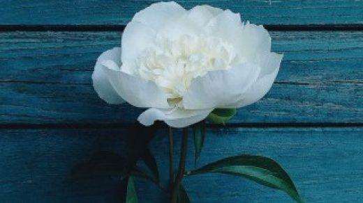 Картинки на телефон цветы 2018 - самые красивые и прикольные 17
