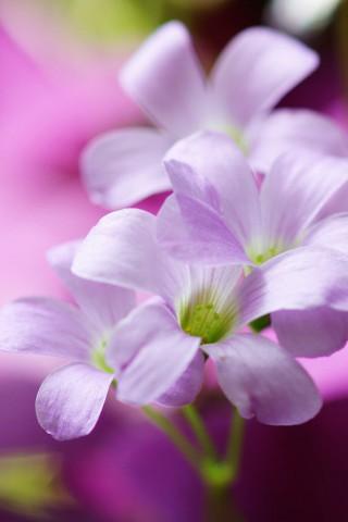 Картинки на телефон цветы 2018 - самые красивые и прикольные 18