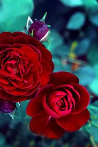 Картинки на телефон цветы 2018 - самые красивые и прикольные 5