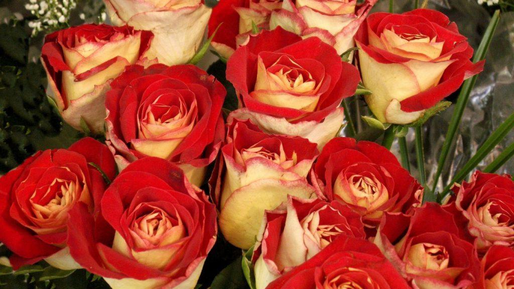 Красивые картинки цветов на рабочий стол - скачать подборка №3 10