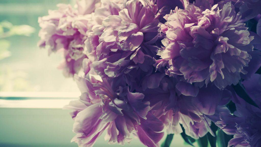 Красивые картинки цветов на рабочий стол - скачать подборка №3 5
