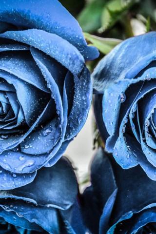 Красивые картинки цветов на телефон - скачать прикольные и классные 1