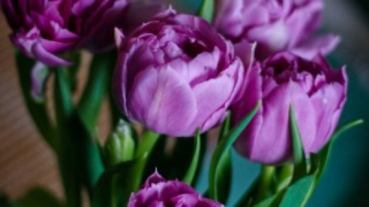 Красивые картинки цветов на телефон - скачать прикольные и классные 13