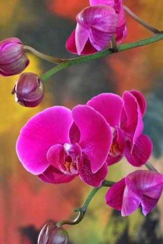 Красивые картинки цветов на телефон - скачать прикольные и классные 14