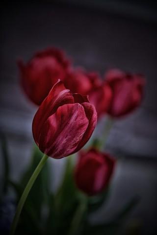 Красивые картинки цветов на телефон - скачать прикольные и классные 3